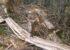 Fiscalía captura a siete personas por talar 124 hectáreas de bosque en el Pacífico